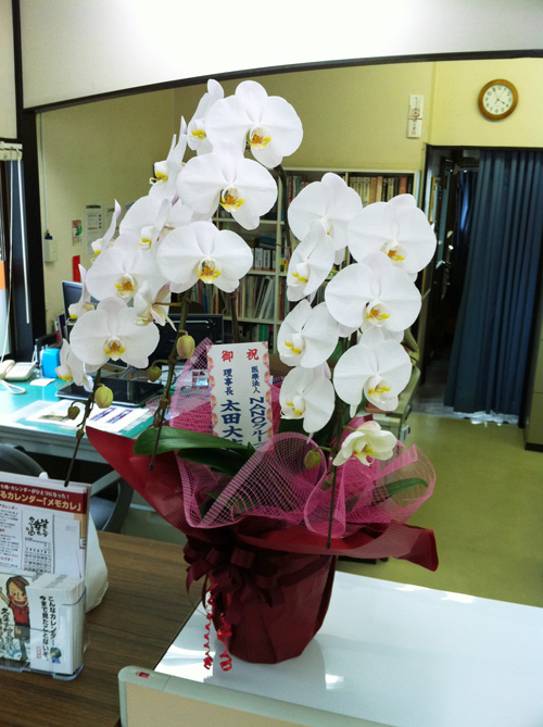 NANOグループの太田先生からいただいた大きな胡蝶蘭