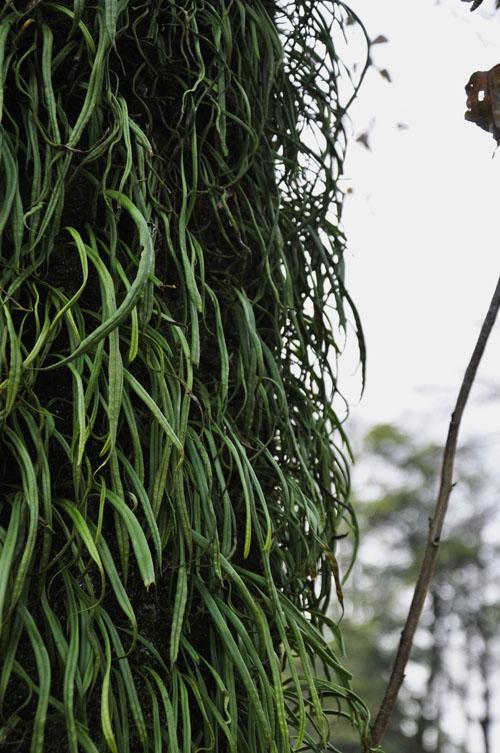 石岳動植物園(佐世保市船越町)の亜熱帯っぽい樹木