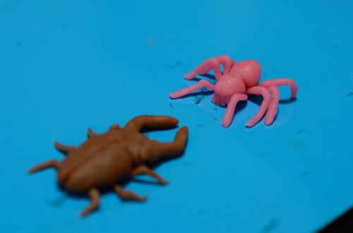 クワガタと戦う蜘蛛